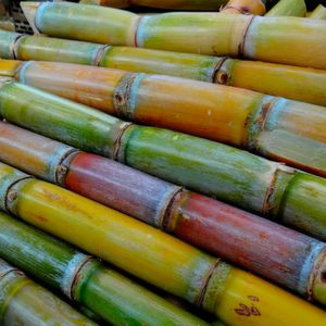 Complex Sugarcane Genome Successfully Sequenced