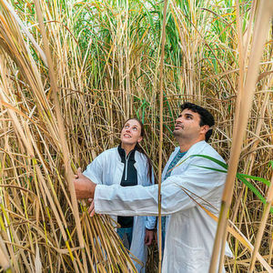 Six European universities have formed an international alliance with focus on bioeconomy.