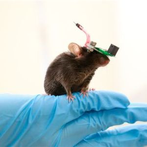 Researchers Succeed in Non-Invasive Deep Brain Simulation of Mice