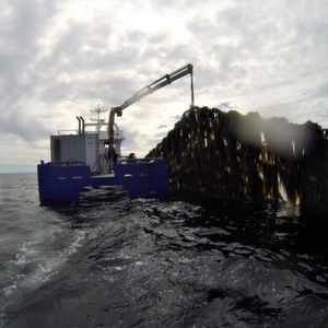 In 2017, the production of farmed kelp in Norway was 145 tons. However, by 2050 the production is projected to reach 20 million tons. The image shows kelp farming by Frøya in Sør-Trøndelag.