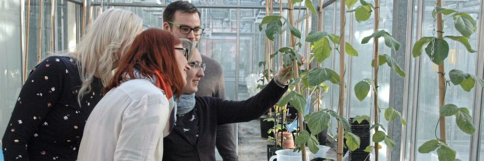 "Fig. 1: At the Julius Kühn Institute (JKI), Federal Research Center for Cultivated Plants in Quedlinburg, some researchers are trying to change the DNA of cultivated plants such as soy bean via genome editing in order to scientifically investigate the ""new breeding technique"" and potential risks."