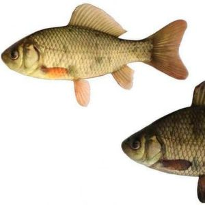 The crucian carp lower down has lived near predators, and is bigger (in height).