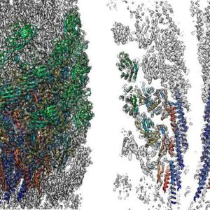 Three dimensional density map and atomic model of the native supercoiled flagellar hook revealed by cryoEM image analysis. Left: side view; right: a central section.