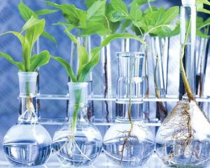 The ´green´side of chemistry on the growth path. (Picture: Shutterstock)