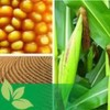 Biomasse stellt die Anlagenbauer vor neue technische Herausforderungen