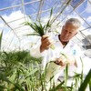 Scientists Call for Turnaround in Weed–Control Research