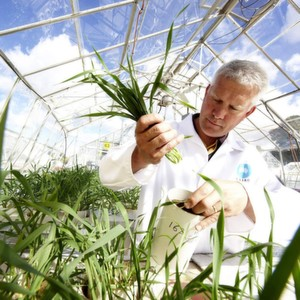 As herbcicide resistance becomes increasingly problematic, agro–scientists called for new research initiatives at a recent symposium hosted by Bayer CropScience.