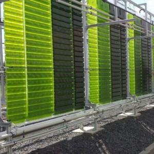 s dzucker z chtet algen zur produktion von biokraftstoff. Black Bedroom Furniture Sets. Home Design Ideas