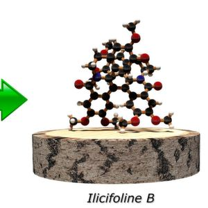 Molecules from wood: Production of active substances from wood-based starting materials