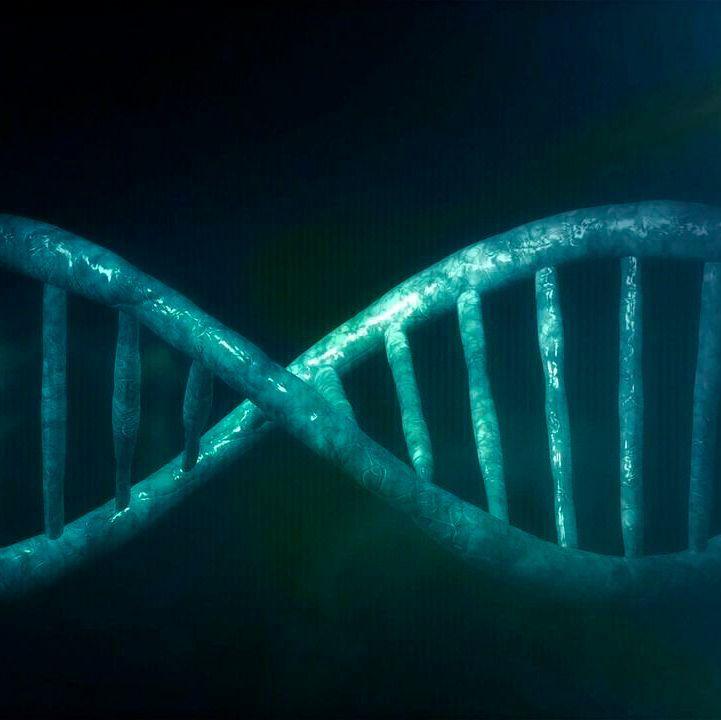 Neandertaler Gene Stärkten Das Immunsystem Moderner Menschen
